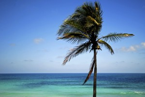 Tropical beach, blue sky & sea, with palm tree